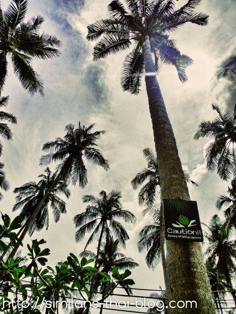 caution coconut sign