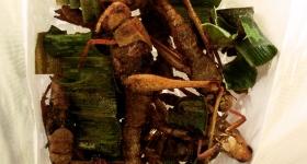 thai-heushrecken-als-essen