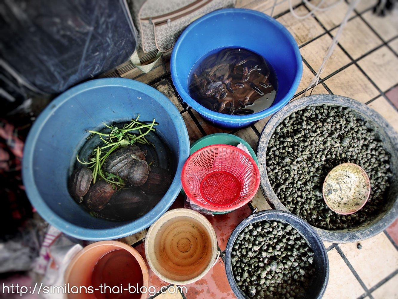 Turtle fresh market