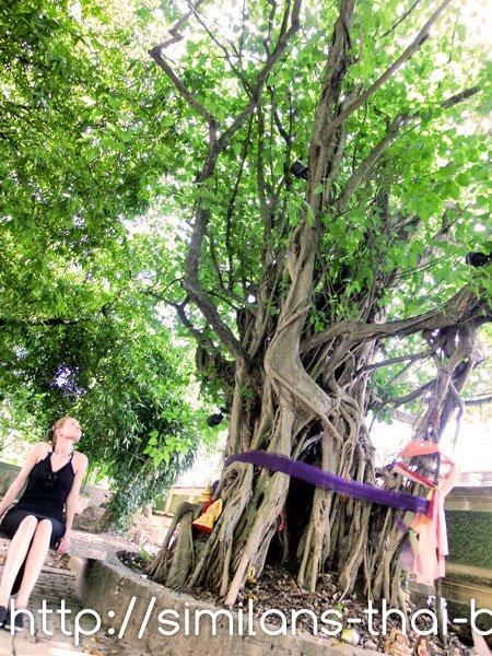 cimg0883-temple-tree