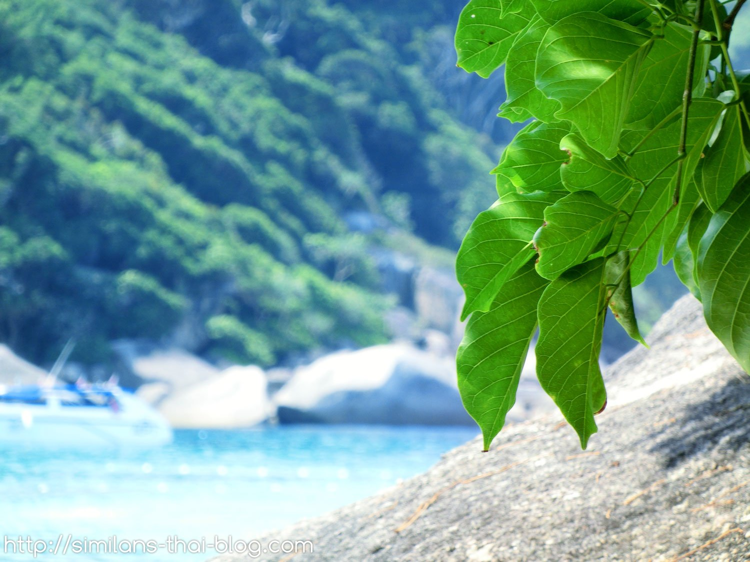 similan-fresh-leaves