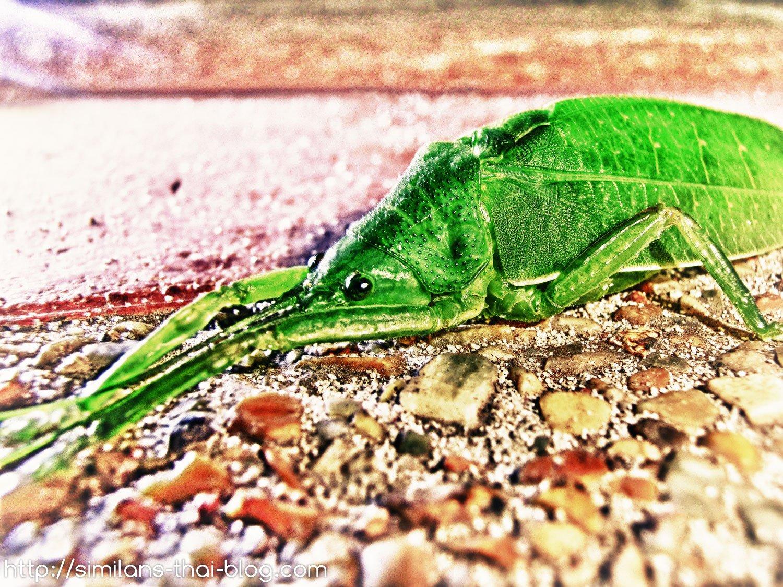 green-thai-animal