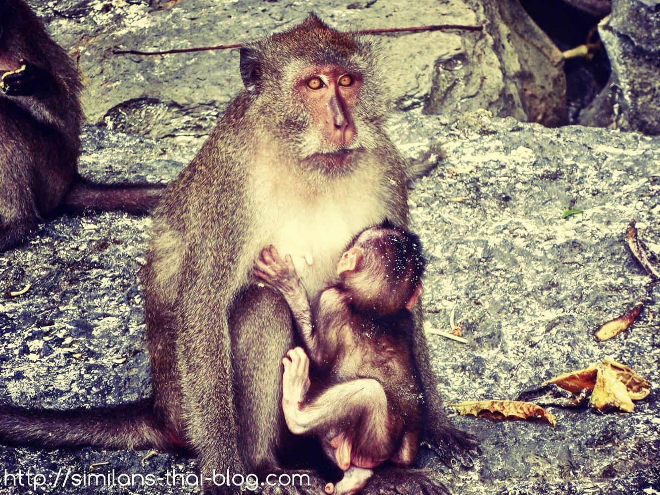 monkeymom-with-child