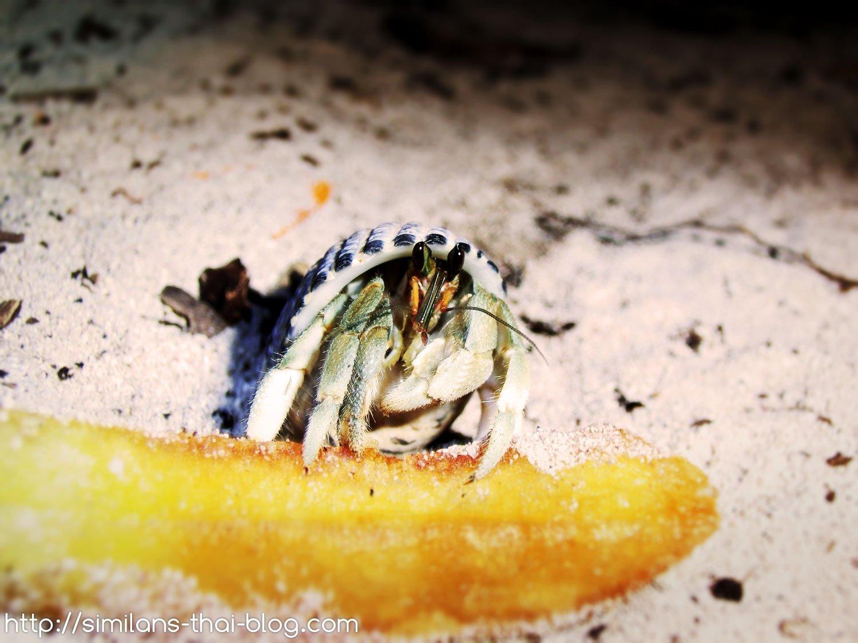 mr-crabs